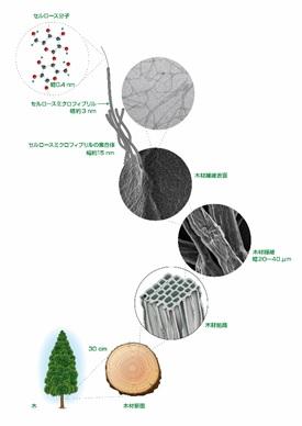 nanocellulose-microfibril